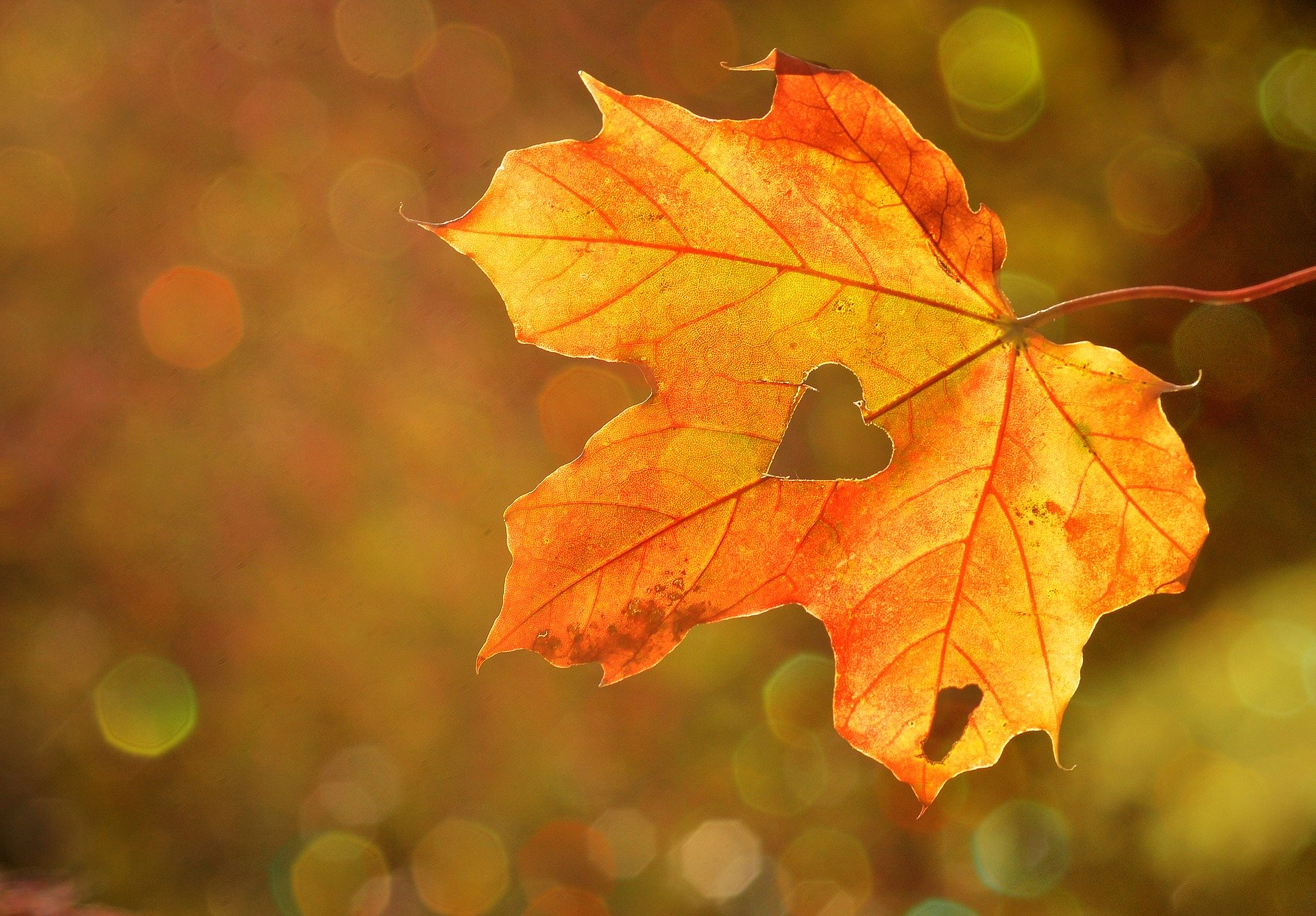 Autunno in Inglese